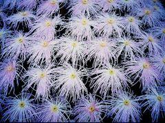 Optical fibers ? by <b>@mabut</b> ( a Panoramio image )