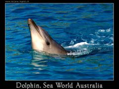 Dolphin, Sea World by <b>www.tatjana.ingold.ch</b> ( a Panoramio image )