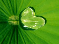 Water of Love ©2008? by <b>©theWolfsEye?</b> ( a Panoramio image )