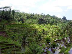Bali, rice terrace at Tegallalang Village,Ubud by <b>voyager747</b> ( a Panoramio image )