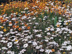 Blooming Desert - Carpet 4 by <b>anur</b> ( a Panoramio image )