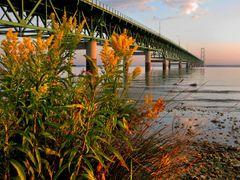 Mackinac Bridge at Sunrise by <b>Lars Jensen</b> ( a Panoramio image )