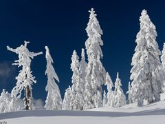 Winter Wonder Woods by <b>Danny Xu</b> ( a Panoramio image )