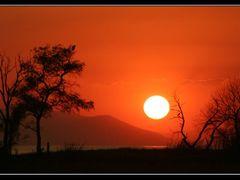 Arboles al atardecer en Chapala - Trees at sunset in Chapala Lak by <b>J.Ernesto Ortiz Razo</b> ( a Panoramio image )