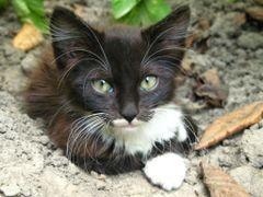Солодка маленька киця \ Sweet little cat by <b>Leo N</b> ( a Panoramio image )