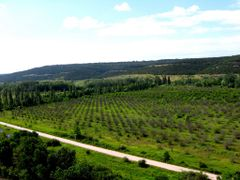 Orchards by <b>~?Alex_G?~</b> ( a Panoramio image )