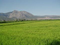 Yesilkoy-Celtik Tarlas? by <b>Omer ABAZ</b> ( a Panoramio image )