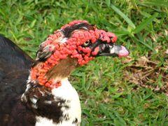 Tropical bird near the lagoon on Mahe, Seychelles by <b>Daniel Balazs Harcz</b> ( a Panoramio image )