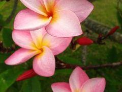 Tropical flowers (Tropusi viragok) by <b>Daniel Balazs Harcz</b> ( a Panoramio image )