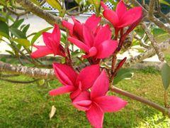 Tropical flowers by <b>Daniel Balazs Harcz</b> ( a Panoramio image )