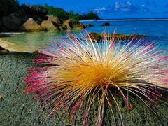 Lonely flower by <b>Daniel Balazs Harcz</b> ( a Panoramio image )