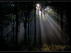 Schellenberger Wald by <b>Ulrich Greger</b> ( a Panoramio image )