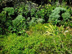 Selva de Xcacel. Riviera Maya. Mexico by <b>Antonio Cristerna</b> ( a Panoramio image )