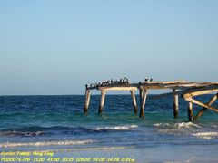 Abandoned pier by <b>Tommy Au</b> ( a Panoramio image )