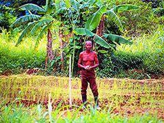 Farmer Kande bay by <b>Steve du Bruyn</b> ( a Panoramio image )