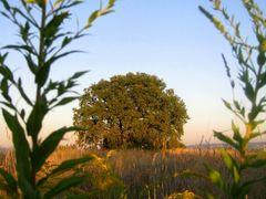 Baumblick by <b>marita1004 - VIEWS? No, thanks!</b> ( a Panoramio image )