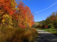 fall color, Etobicoke creek, Mississauga by <b>KennySun</b> ( a Panoramio image )