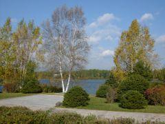 Two birches at Lake Samji by <b>Eckart Dege</b> ( a Panoramio image )