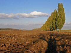 Podled na alej u Pritok(view on alley near Pritoky) by <b>Wilys (cz)</b> ( a Panoramio image )