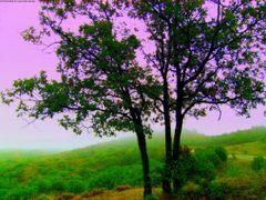 agaclar?n aras?ndan tepeler by <b>© Mustafa ERKEK</b> ( a Panoramio image )