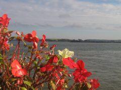 Cobh by <b>Inaki Lasa Rodriguez</b> ( a Panoramio image )