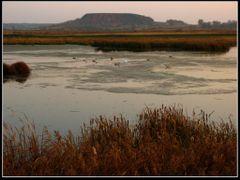 Дикі лебеді \ Dzikie ?ab?dzie \ Swans by <b>Leo N</b> ( a Panoramio image )