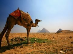 A camel and the Giza pyramid by <b>yadiyasin</b> ( a Panoramio image )