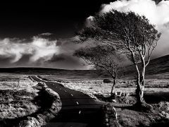 The Sally Gap, Co Wicklow, Ireland. by <b>2c</b> ( a Panoramio image )