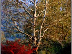 /-/-/ by <b>Neim Sejfuli ?</b> ( a Panoramio image )