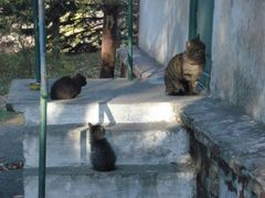 Crimea, Nauchny, Cats in the turn by <b>Lesna_T</b> ( a Panoramio image )
