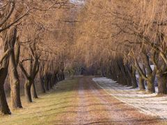 Willow Lane by <b>George Sled</b> ( a Panoramio image )