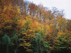 Lukovo - Tovic hill in the autumn by <b>Montenegrin77</b> ( a Panoramio image )