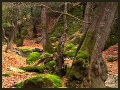 """When the butterflies leave...- """"The valley of the Butterflies, R by <b>eleni iak.</b> ( a Panoramio image )"""
