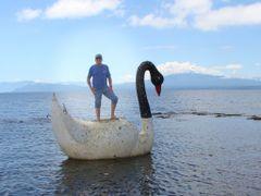 Cisne domado no lago Llanquihue. by <b>Plinio Fasolo</b> ( a Panoramio image )