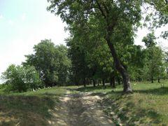 Raul Sabar by musca.ro by <b>www.camin-pentru-batrani.ro</b> ( a Panoramio image )