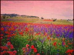 tarlalara bahar gelince... by <b>© Mustafa ERKEK</b> ( a Panoramio image )