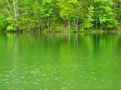 The greenest place I ever saw, the Voron lake, Crimea by <b>soffja</b> ( a Panoramio image )