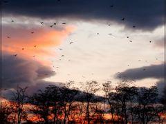 Pallatica-Sunset by <b>Neim Sejfuli ?</b> ( a Panoramio image )