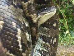 Madagascar.Ranomafana le parc.Python dans ma main... by <b>Raymond Grelet</b> ( a Panoramio image )