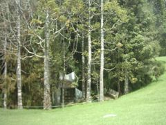 Forest by <b>sterlingpace</b> ( a Panoramio image )