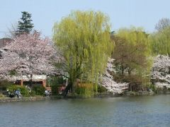 Spring in Shakujii park by <b>itss_yyama</b> ( a Panoramio image )