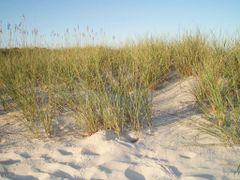 Huntington Beach State Park by <b>Maria Pavlova</b> ( a Panoramio image )