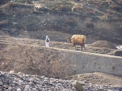 A man and a camel near Sayad Bridge  by <b>vetman</b> ( a Panoramio image )