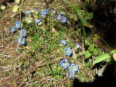 "Un peu ""fleur bleue"" by <b>gabolde</b> ( a Panoramio image )"
