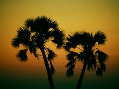 Sunset at Palmwag - Damaraland, Namibia by <b>Francesco Villa</b> ( a Panoramio image )