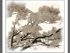 Snow tree by <b>Без названия</b> ( a Panoramio image )