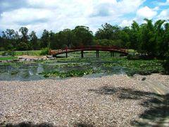 Bridge at Coffs Botanic Gardens by <b>EcologistGreg</b> ( a Panoramio image )