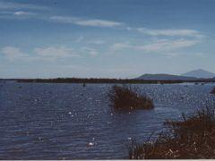 Lake Chapala 1995 by <b>Juan Erickson Guzman</b> ( a Panoramio image )