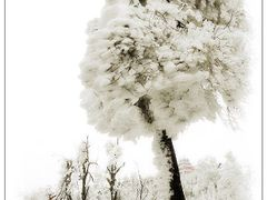 #111 Snow tree after the blizzard by <b>Без названия</b> ( a Panoramio image )