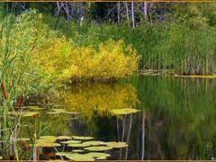 Ишимский плёс by <b>стрепет</b> ( a Panoramio image )